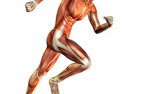 anatomiya bega