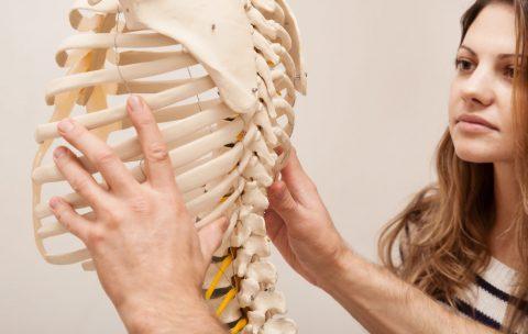 Chiropractor explains to Patient using plastic model