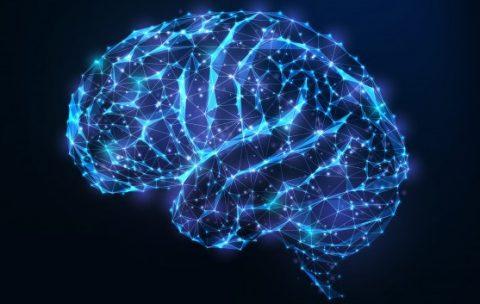 gologrammy mozga