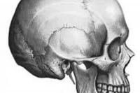 kranialnaya osteopatiya. Visochnaya, zatylochnaya i temennaya kosti