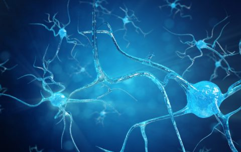мозг биодинамика
