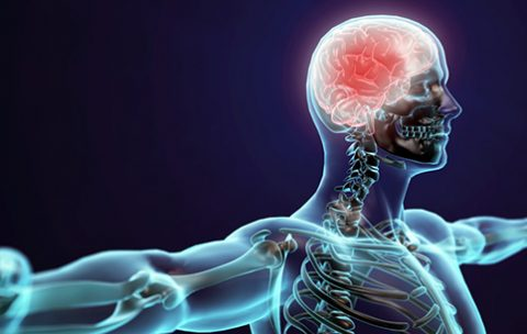 mozg-govorit-2 IKPK