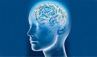 neirokineziologicheskoe formatirovanie mozga