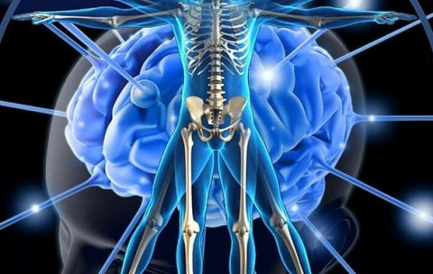 prinzipi neirokineziologii