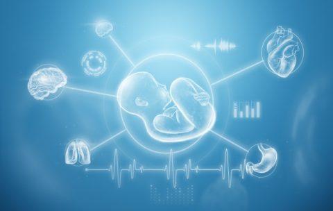 Эмбриологическое развитие головы и шеи. Оценка и лечение лица и черепа как эмбриологических «сегментов».