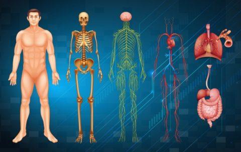 Краниальные нервы (7-12 пара)