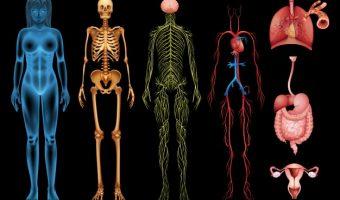 Обучение по остеопатаии. Краниальные нервы (0-6 пара)
