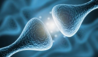 Периферическая нервная система анатомия, физиология, подходы к диагностике и коррекции соматических дисфункций